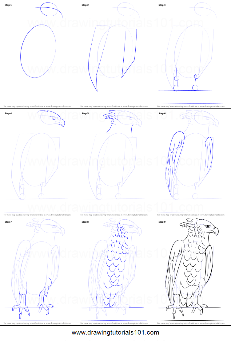 Step by step drawing tutorial on how to draw a harpy eagle