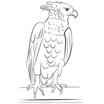 How to Draw a Harpy Eagle