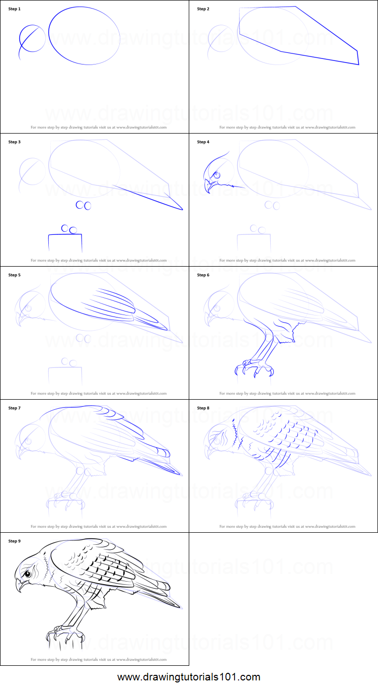 How to Draw a Hawk printable step