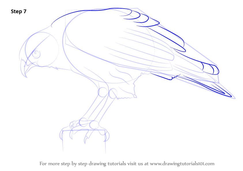 learn how to draw a hawk bird of prey step by step