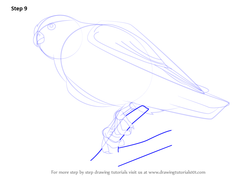 Step By Step How To Draw A Merlin Drawingtutorials101 Com