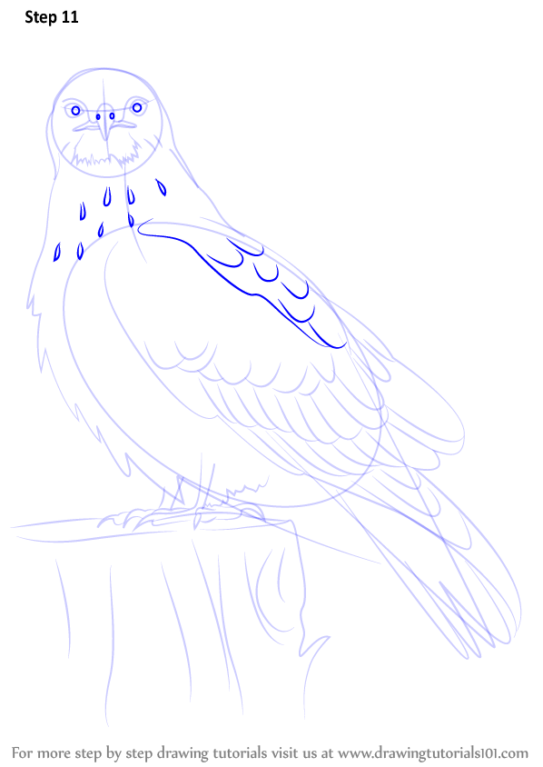 how to draw a hawk head