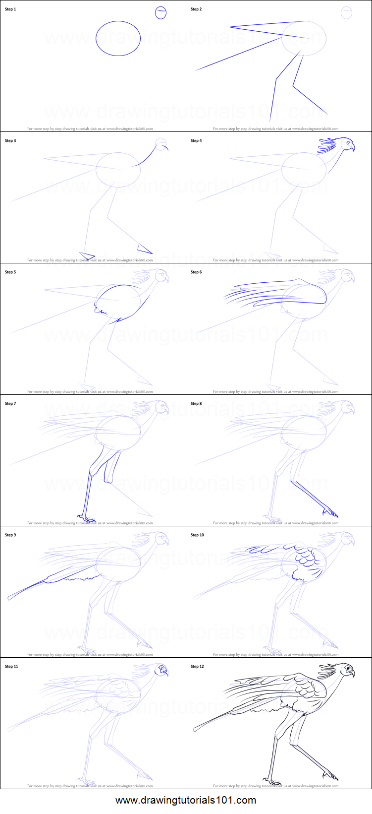 how to draw a secretary bird printable step by step drawing sheet how to draw