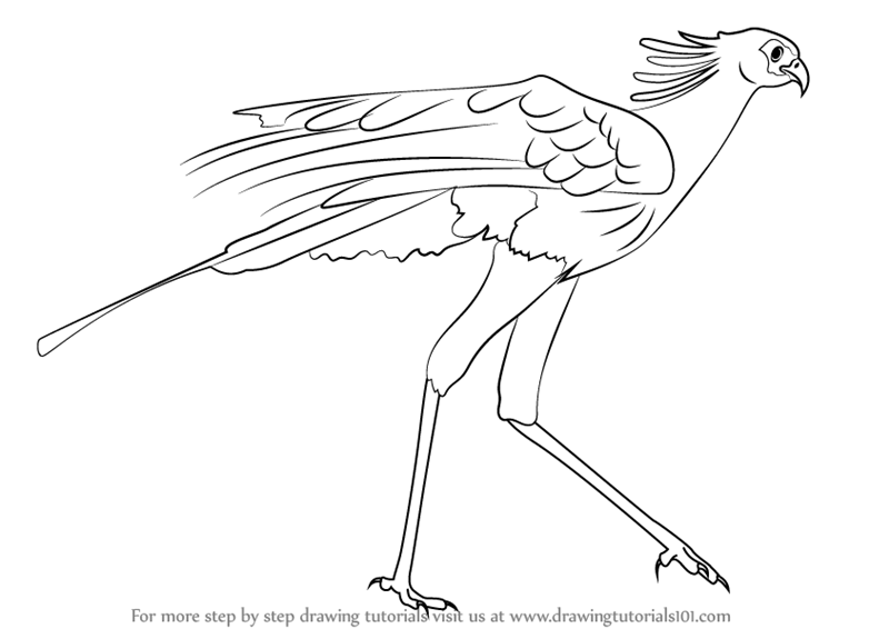 learn how to draw a secretary bird bird of prey step by