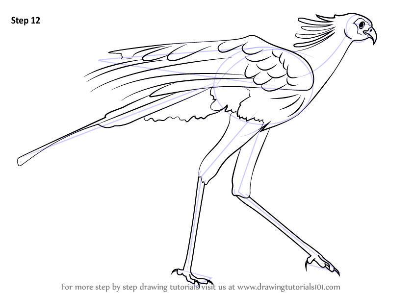 Step by Step Drawing tutorial on How to Draw a Secretary Bird
