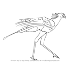 How to Draw a Secretary Bird