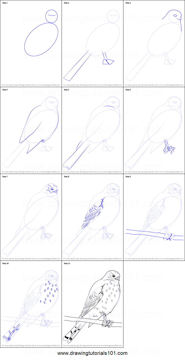 how to draw a hawk step by step easy