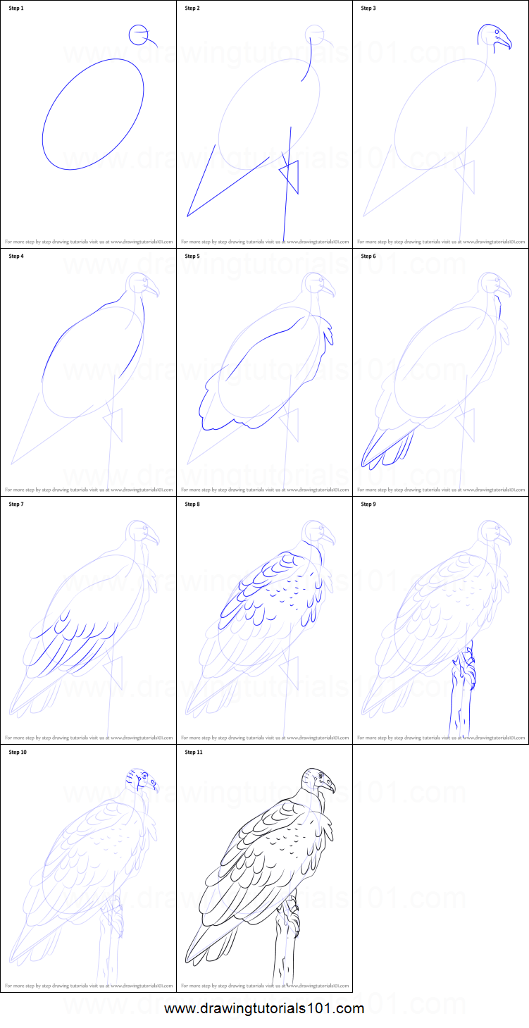 how to draw a turkey vulture printable step by step drawing sheet
