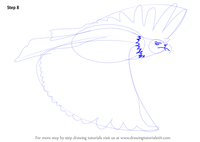 Learn How to Draw a African Fish Eagle in Flight (Birds) Step by ...