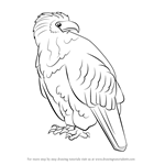 How to Draw an African Fish Eagle