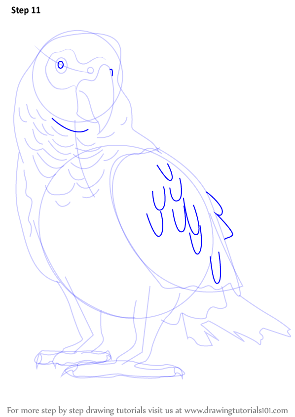 Learn How to Draw an African Grey Parrot (Birds) Step by Step ...