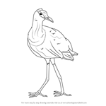 How to Draw an African Jacana