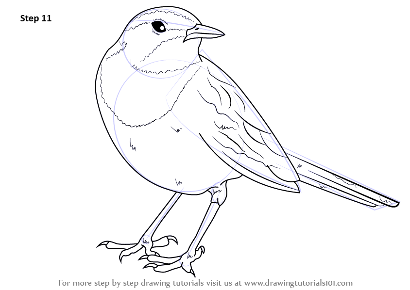 Step By Step How To Draw An African Pied Wagtail