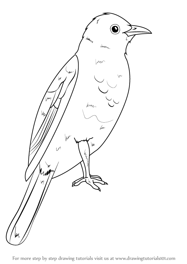 Learn How To Draw An African Red-Eyed Bulbul (Birds) Step By Step  Drawing Tutorials