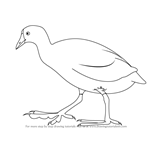 How to Draw an American Coot