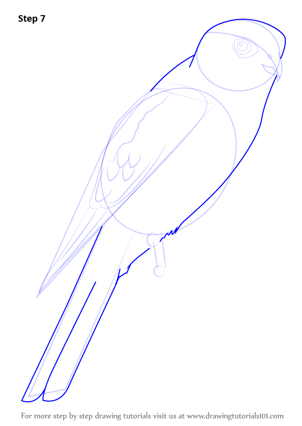 Learn How to Draw an American Kestrel Birds Step by Step