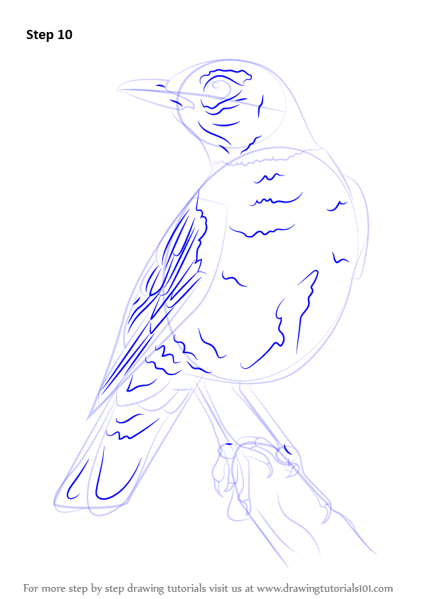 Learn How to Draw an American robin (Birds) Step by Step ...