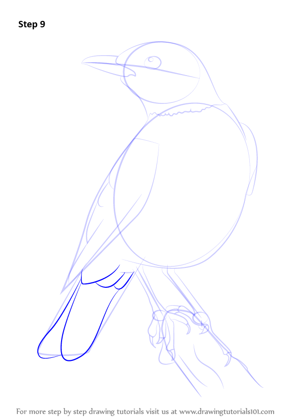Step by Step How to Draw an American robin ...