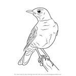 How to Draw an American robin