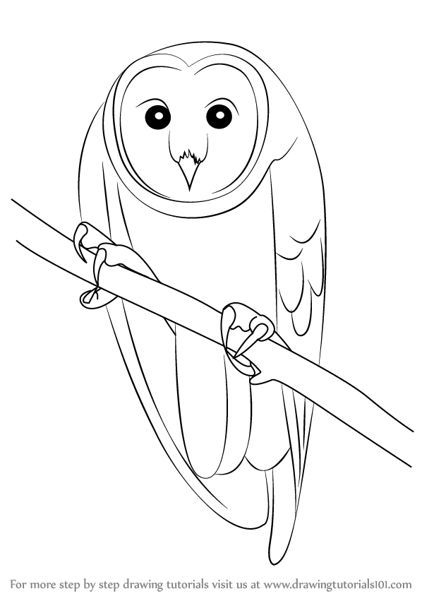 Learn how to draw an australian masked owl birds step by for Owl beak drawing