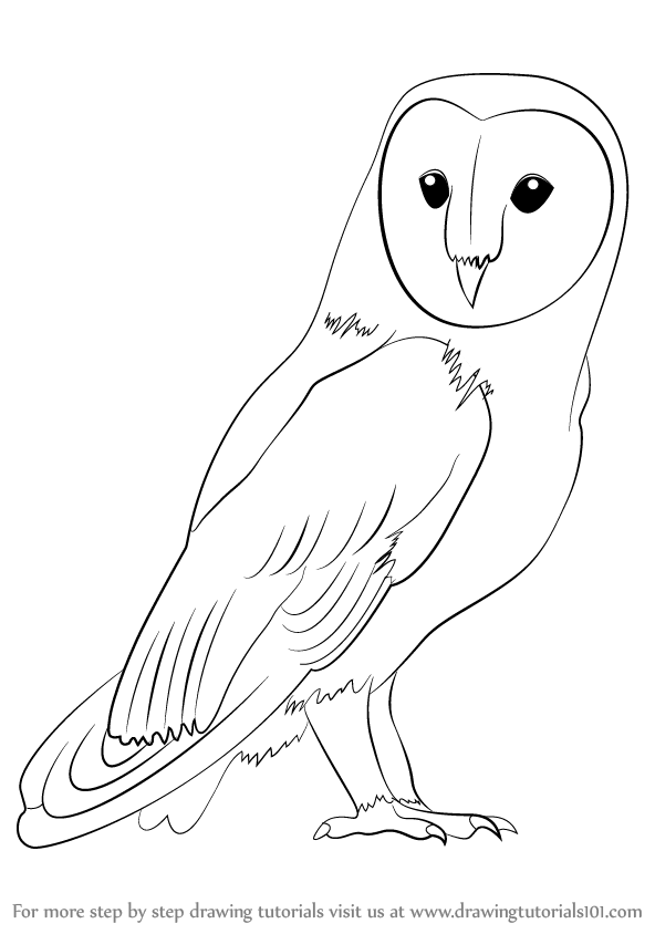 Learn how to draw a barn owl birds step by step drawing tutorials