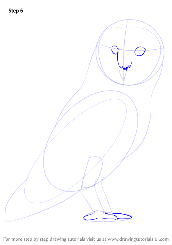 Learn how to draw a barn owl birds step by step for Draw the owl