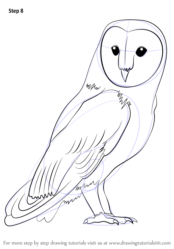 Learn How To Draw A Barn Owl Birds Step By Step