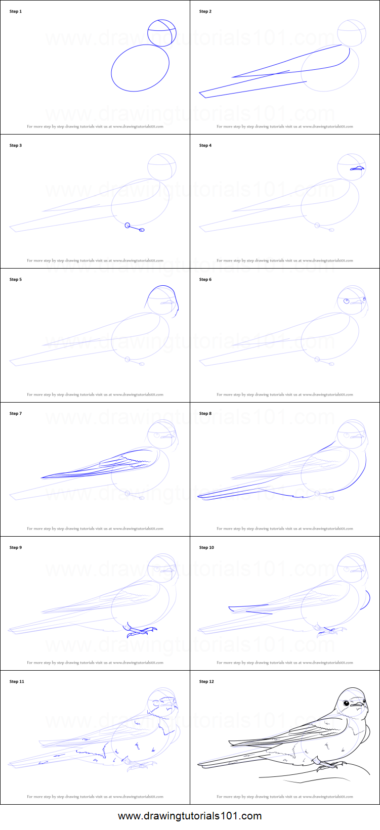 How To Draw A Barn Swallow Printable Step By Drawing Sheet DrawingTutorials101