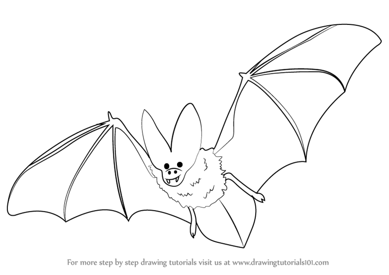 Learn How To Draw A Bat (Birds) Step By Step  Drawing Tutorials