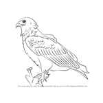 How to Draw a Bateleur Eagle