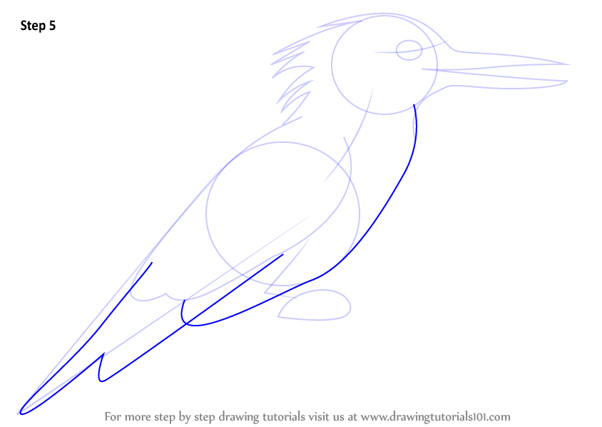 Learn How To Draw A Belted Kingfisher Birds Step By Step Drawing