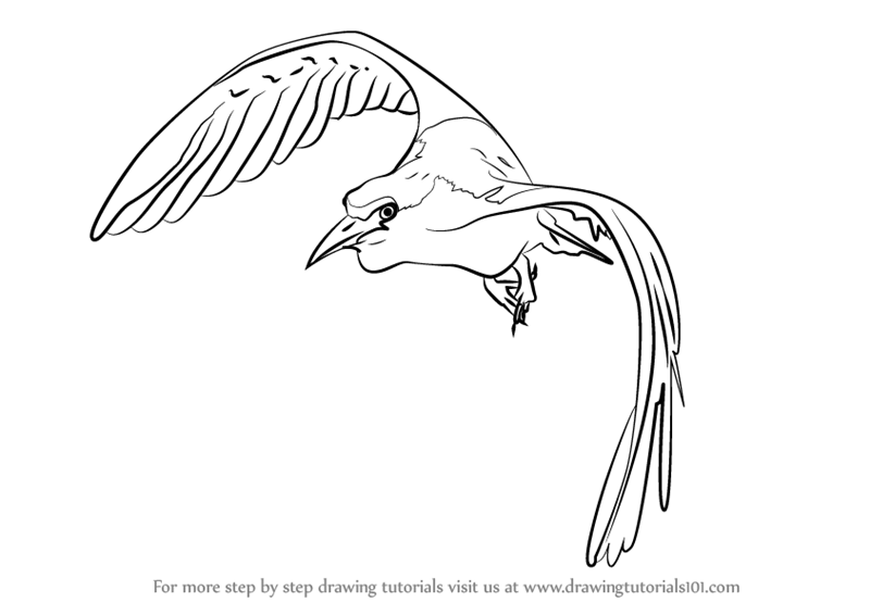 Learn How To Draw A Bird In Flight Birds Step By Step Drawing