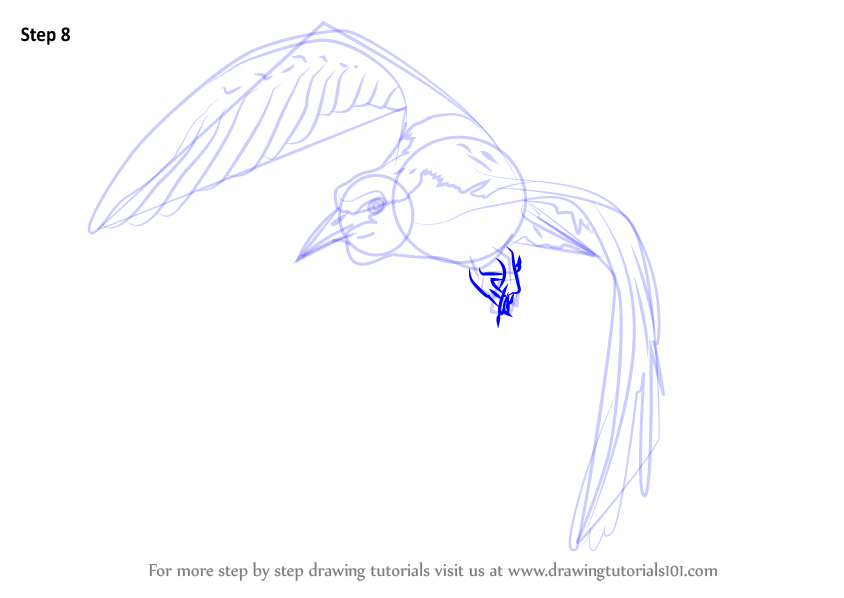 how to draw a kingfisher bird step by step