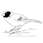 How to Draw a Black-Cheeked Waxbill