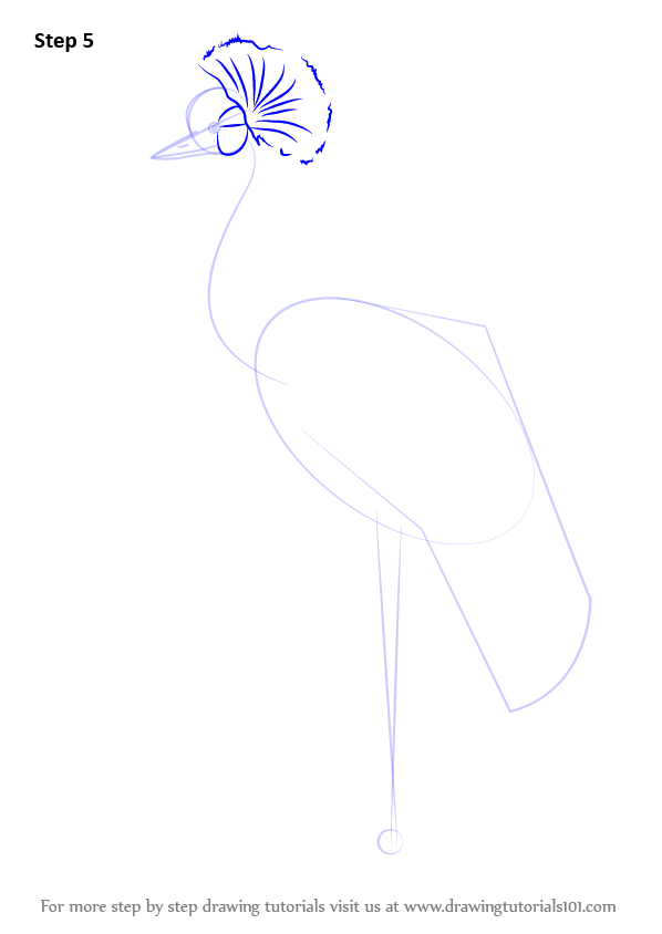 Learn how to draw a black crowned crane birds step by for How to draw a crane step by step