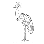 How to Draw a Black Crowned Crane