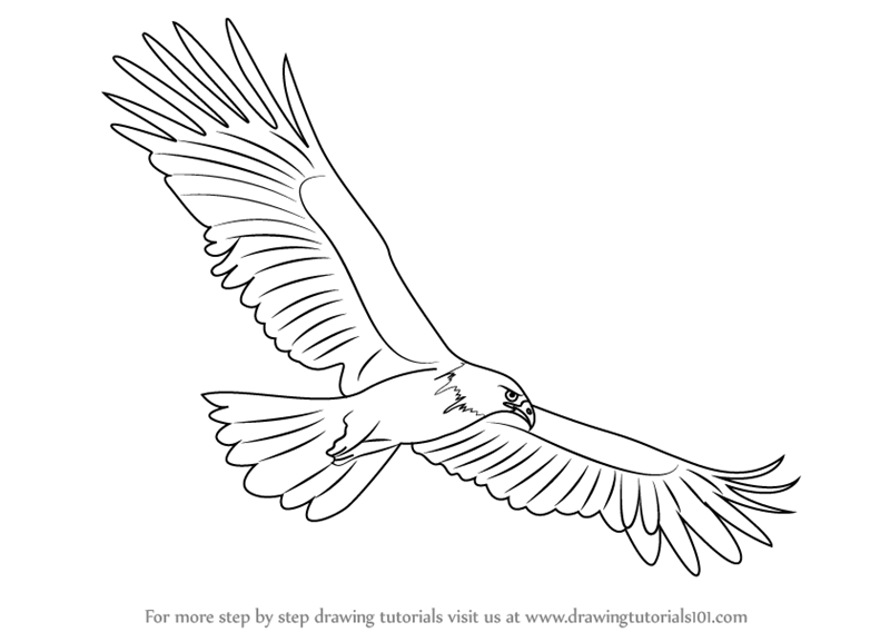 Learn how to draw a black eagle birds step by step drawing tutorials