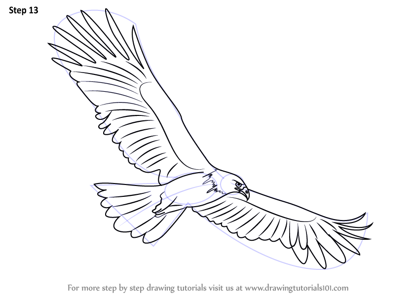 Line Drawing Eagle : Learn how to draw a black eagle birds step by
