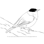 How to Draw a Blackcap