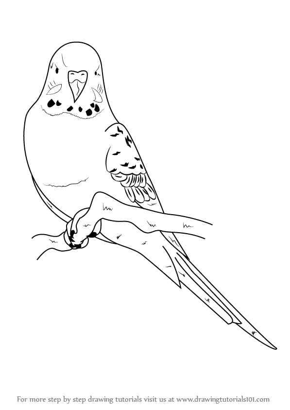 budgie coloring pages - photo#15