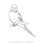 How to Draw a Blue Budgie