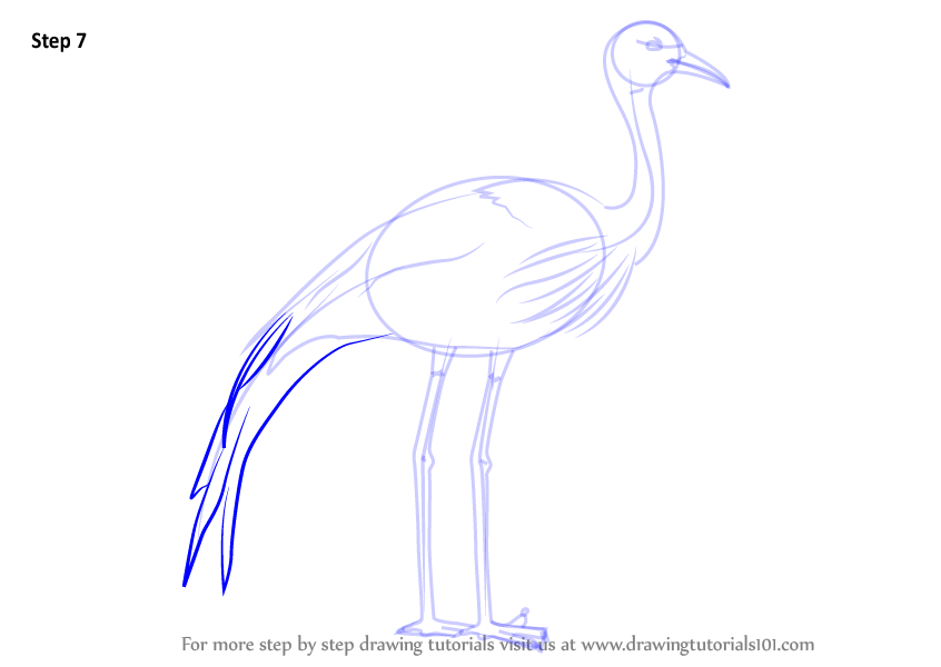 Learn how to draw a blue crane birds step by step for How to draw a crane step by step