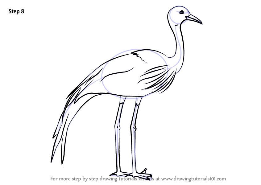 Learn How To Draw A Blue Crane Birds Step By Step