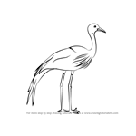 How to Draw a Blue Crane