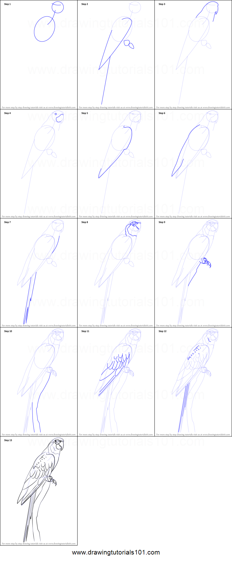 How to Draw a Blue Throated Macaw printable step by step