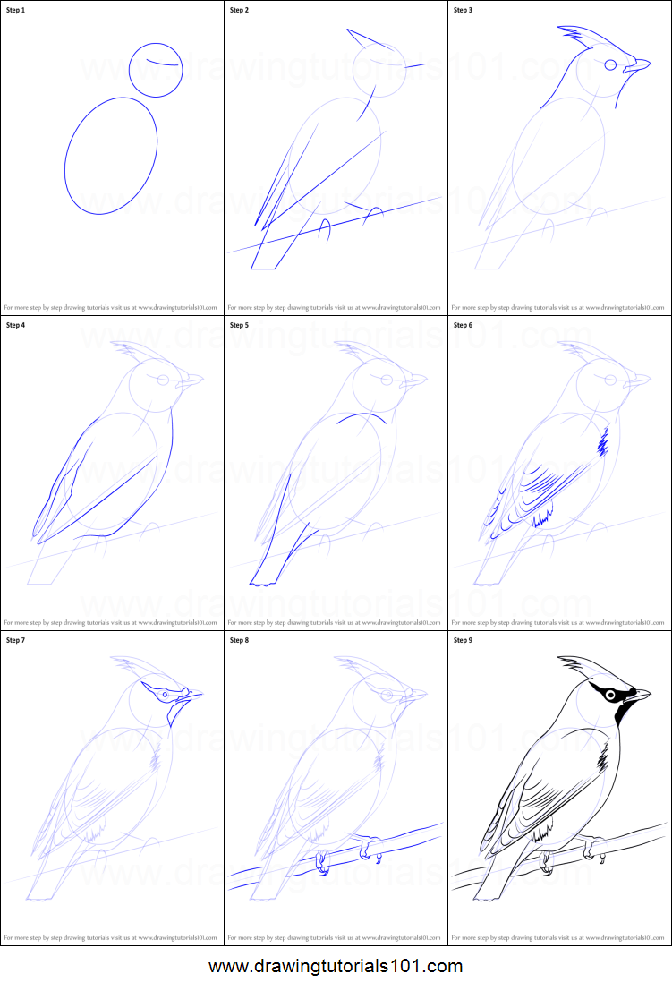 How to Draw Bohemian Waxwing printable step by step