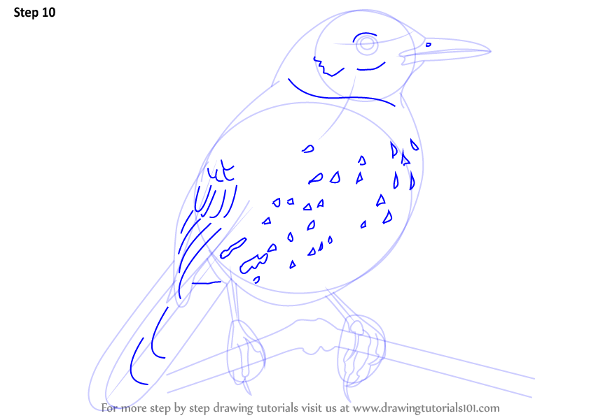 brown thrasher coloring page - step by step how to draw a brown thrasher