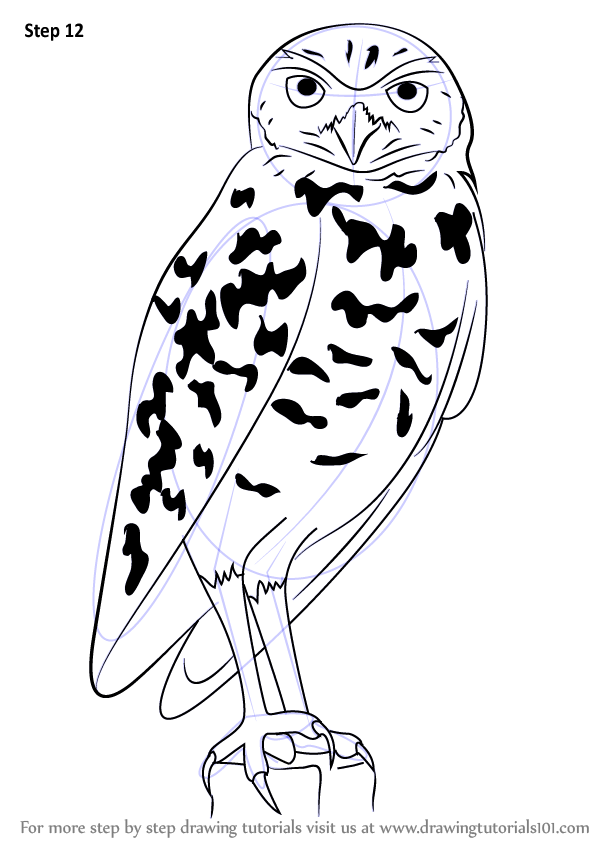 Learn how to draw a burrowing owl birds step by step for Draw an owl in two steps