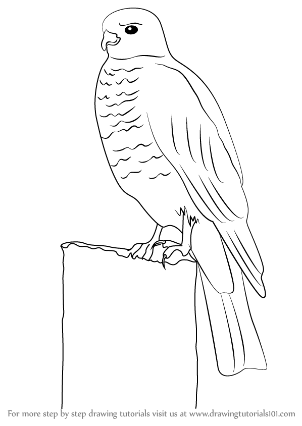 Step by step how to draw a buzzard for How to make doodle art