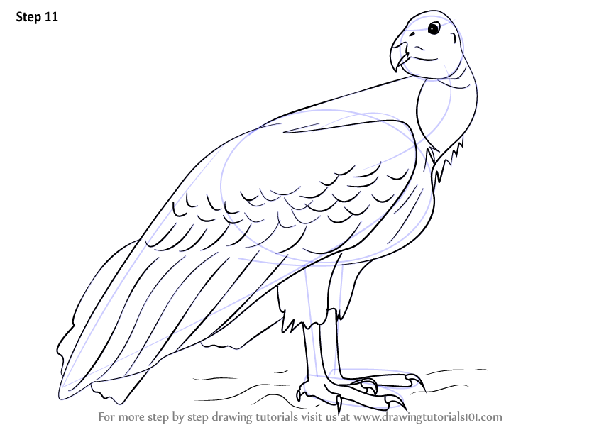 Step By Step How To Draw A California Condor